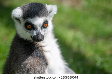A lemur basks in the sunlight