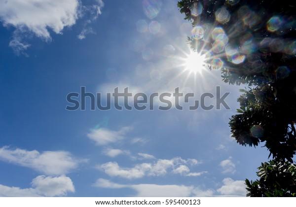 Lens flare through tree silhouette against blue sky
