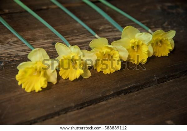 lent lily line