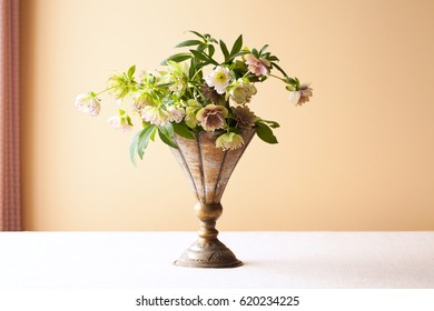 Lenten Roses also known as Hellebore or Christmas Rose in a old vase on tabletop in natural window light.
