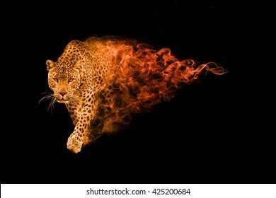 leopard, animal kingdom collection, african wildlife animals, amazing african leopard in a black background