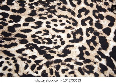 Leopard Backround, Authentic Leopard Skin, Skin's texture of leopard,