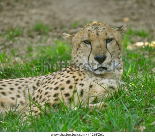 caldwell zoo tyler texas