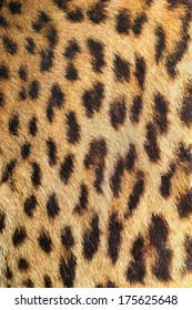 leopard colorful fur real texture dark with spots