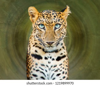 Leopard in the forest