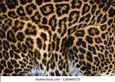 Leopard fur background texture image background