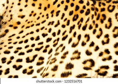 Leopard fur, pattern