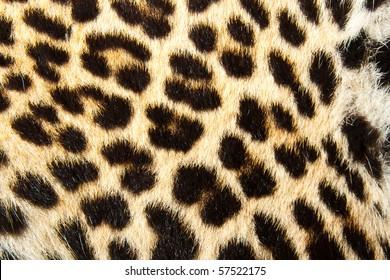 Leopard fur. Texture or background