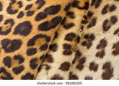 Leopard fur texture closeup for background user