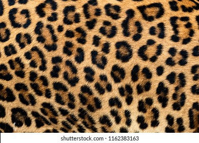 Leopard fur texture (real fur)