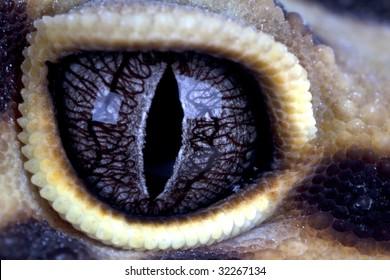 Leopard gecko eye close up