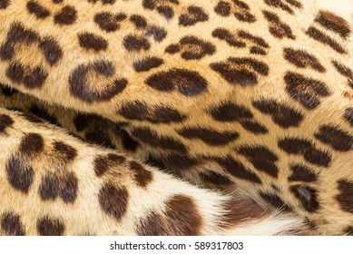 Leopard hairs texture closeup for background use