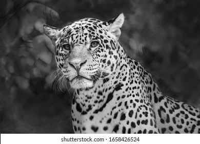 Leopard head shot in black and white