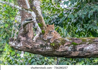 Leopard in the indian jungle