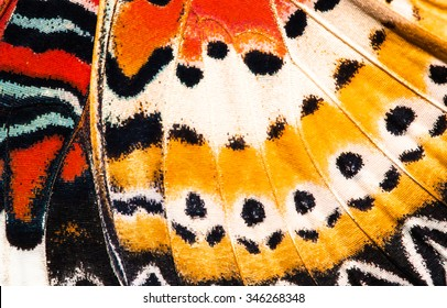 Leopard lacewing butterfly wing texture background