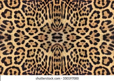 leopard and ocelot skin texture.