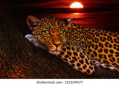 The leopard (Panthera pardus) is one of the five species in the genus Panthera. The leopard occurs in a wide range in sub-Saharan Africa and parts of Asia.