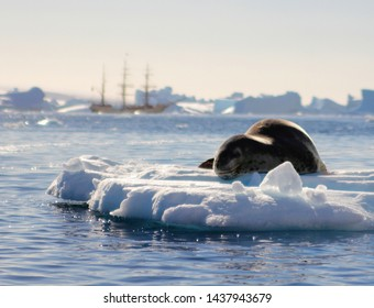 Leopard Seal on Ice Floe Iceberg in Antarctica Antarctic South Pole Sailboat Yacht Clipper Ship Background Sea Ocean Cold Winter Nature Scene Icicle Icey Icy Water Polar Expedition Extreme Snow
