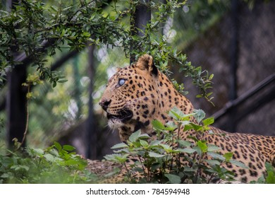 A leopard sitting among the trees