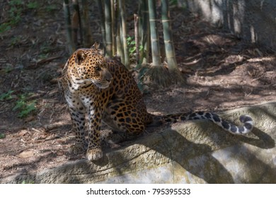 a leopard sitting on ground