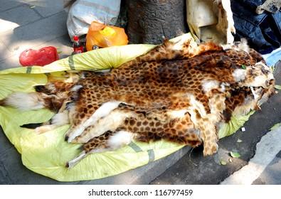 Leopard skin, Guangzhou, China