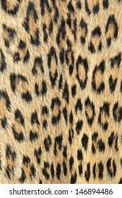 Leopard Skin - Real skin and pattern from Wild Africa, photographed in Namibia - Unique and Beautiful background setting of golden shine and inspirational camouflage.