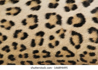 Leopard Skin - Real skin and pattern from Wild Africa, photographed in Namibia - A gorgeous portrait of real spots and rosettes that inspire the modern day world.
