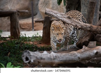 leopard is sleeping relax on the rock.
