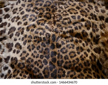 leopard wildlife skin with fur, animal remain as textile texture background