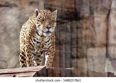 Leopard in the zoo on top