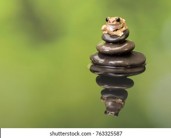 Leptopelis vermiculatus or Peacock Tree Frog as found in Tanzania sitting on a stack of boulders