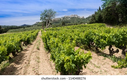 Les Baux-de-Provence historic castle with grape vines in the foreground. Bouches du Rhone, Provence, France, Europe.