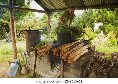 Les Palmistes, France - December 12, 2010: Unidentified farmer produces geranium oil - a fragrant oil used in cosmetics and culinary dishes - at Les Palmistes, Reunion island, France.