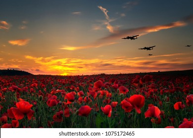 Lest we Forget poppy field with with WW11 planes flying across as the sun goes down.Remembrance day tribute to the fallen.