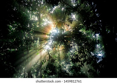 Let the sun shine through you, Misty forest at morning with illuminated alder tree branch.- image
