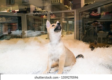 Let's take this puppy, fox dog inside a dog shop showed on the window