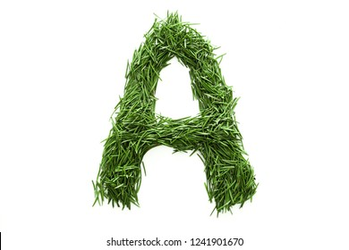 Letter A, alphabet made of green grass. Isolated on white background. Concept: ABC, design, logo, title, text, word