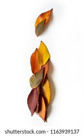 Letter I of colorful autumn leaves. Character I mades of fall foliage. Autumnal design font concept. Seasonal decorative beautiful type mades from multi-colored leaves. Natural autumnal alphabet.