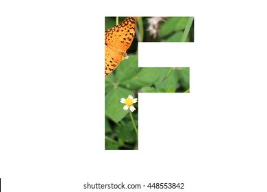 """The letter """"F"""" with butterfly background inside"""