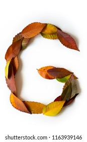 Letter G of colorful autumn leaves. Character G mades of fall foliage. Autumnal design font concept. Seasonal decorative beautiful type mades from multi-colored leaves. Natural autumnal alphabet.