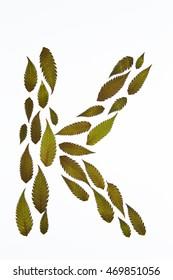 Letter K made of Autumn leaves