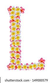 letter l  frangipani flower isolated on white