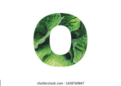 Letter '' O '' alphabet made of real leaves. Illustration of flora alphabet collection for design project, poster, card, invitation, brochure and scrapbook.