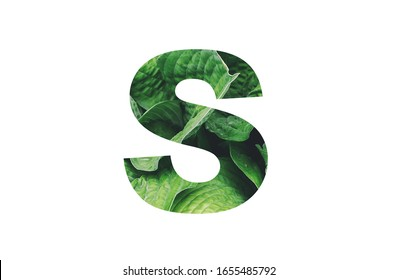 Letter '' S '' alphabet made of real leaves. Illustration of flora alphabet collection for design project, poster, card, invitation, brochure and scrapbook.
