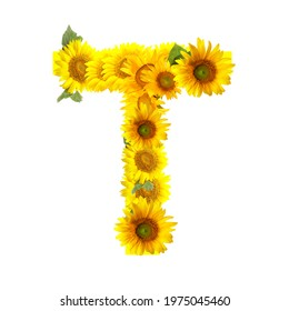 Letter T made of beautiful sunflowers on white background