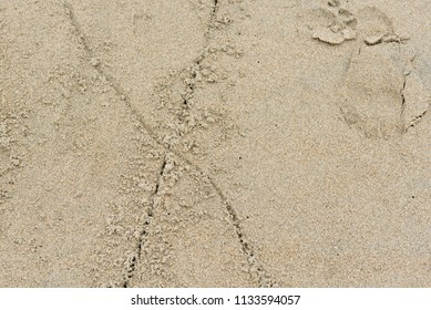 The Letter X in the Sand