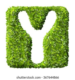 Letter Y made of green leaves isolated on white