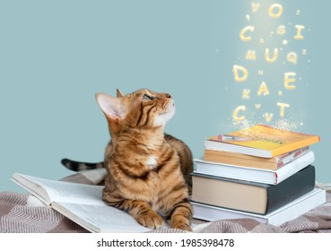 Letters flying out of the book. Magic book. Bengal cat with a book on a soft blanket. Education concept