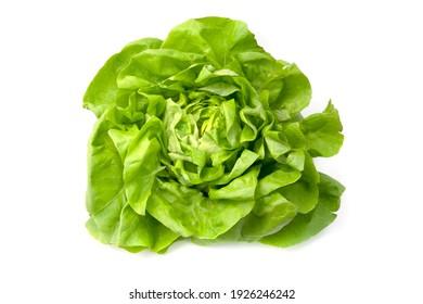 Lettuce (Lactuca sativa) on a white background