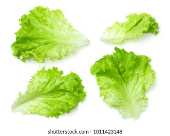 Lettuce leaves isolated on white background. Batavia salad. Top view